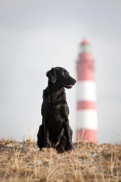 Aenna mit Leuchtturm von Amrum