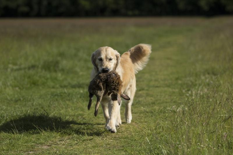 Hunde-107
